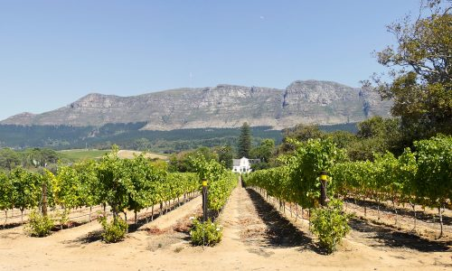 SA citrus specialists to visit EU over black spot row…