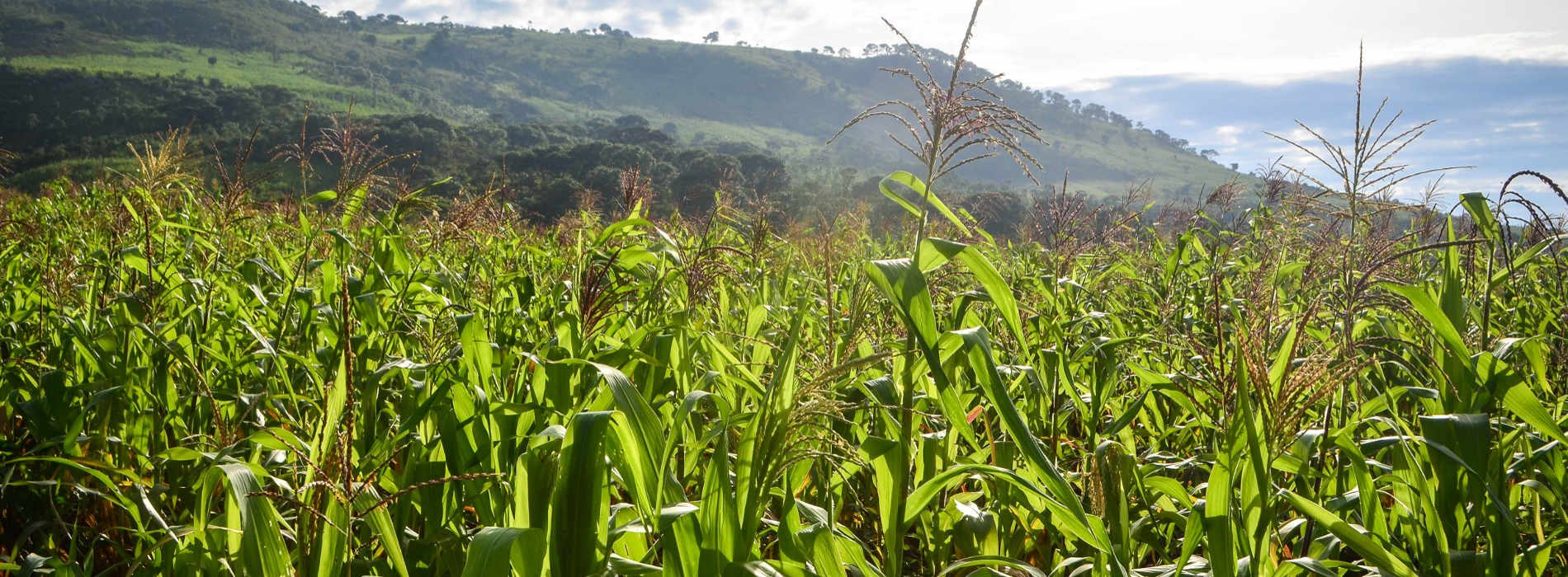 State to embark on maize audit