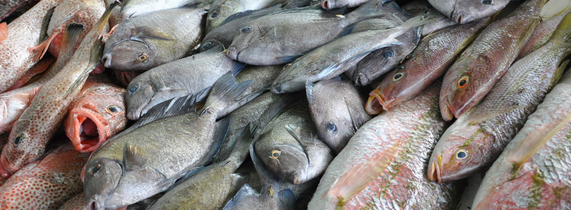 Angola and Argentina study cooperation in the fisheries sector.
