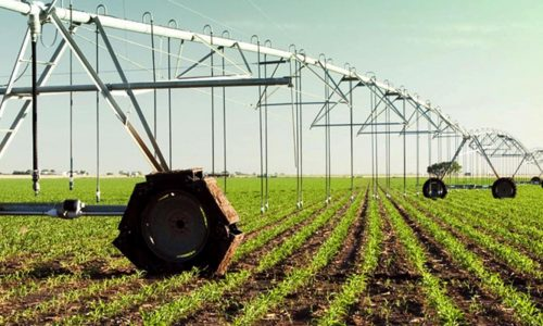 ROWE Farming to grow crops all year round