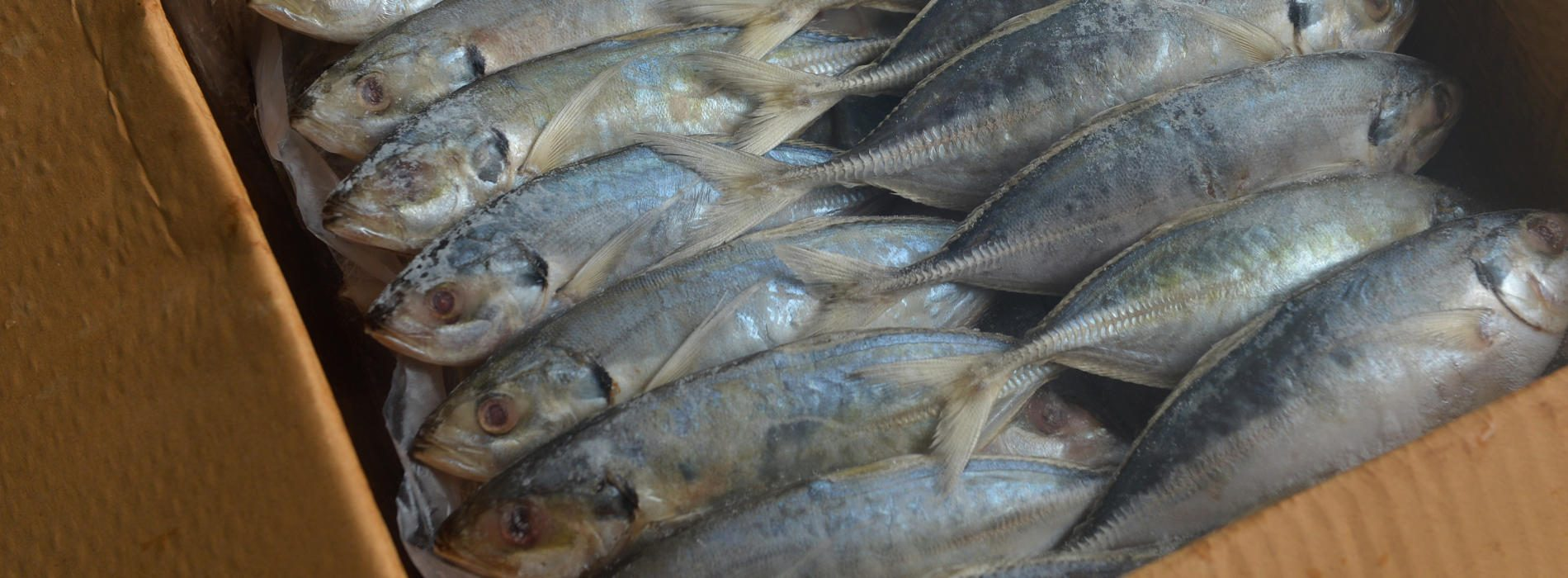Zambia's Fish Imports Must End, President Says..