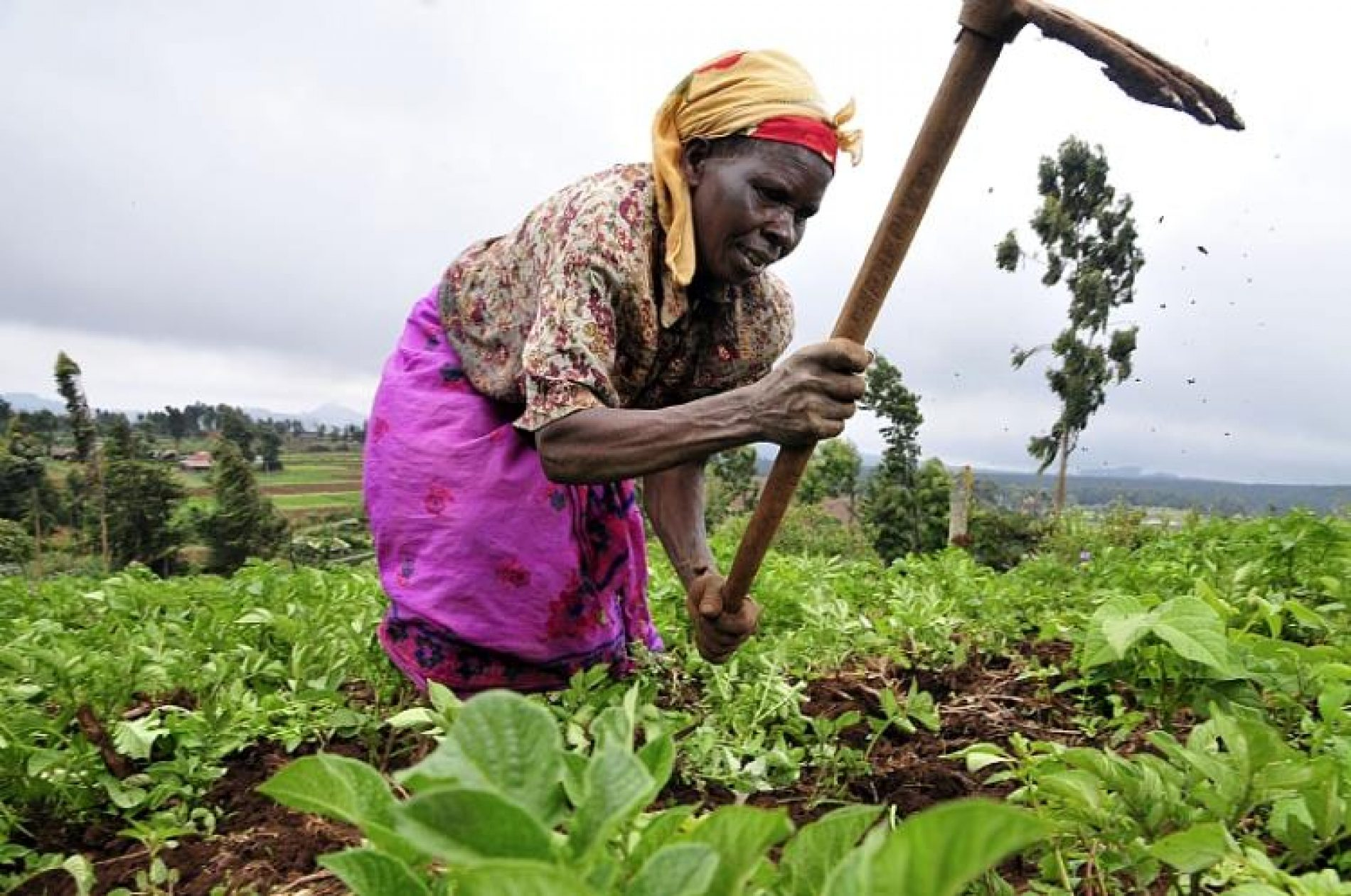 Traditional Farming Sacrificed To Foreign Seed Companies – AFSA