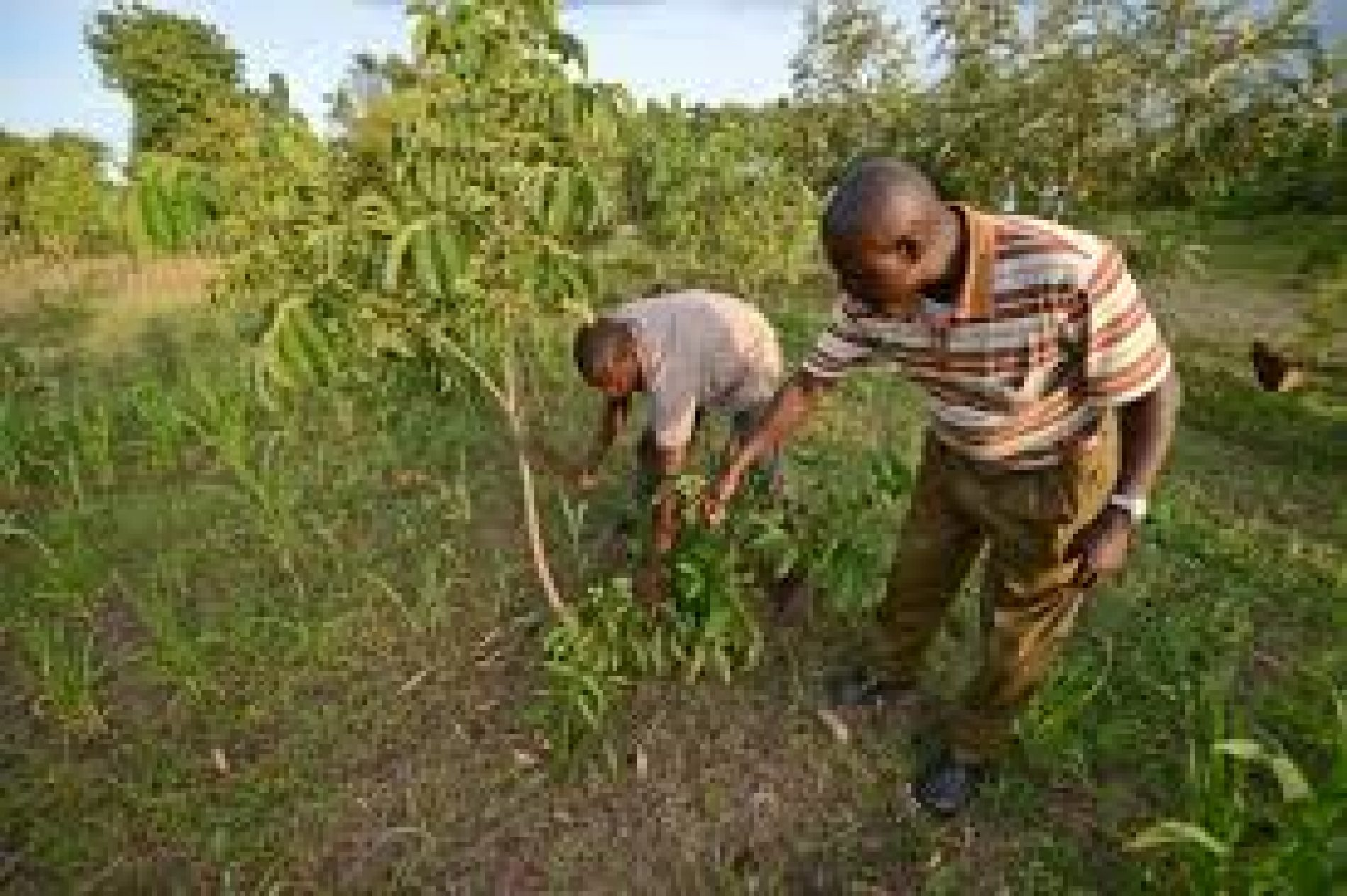 Agro and food-processing plant set to boost 3, 000 farmers