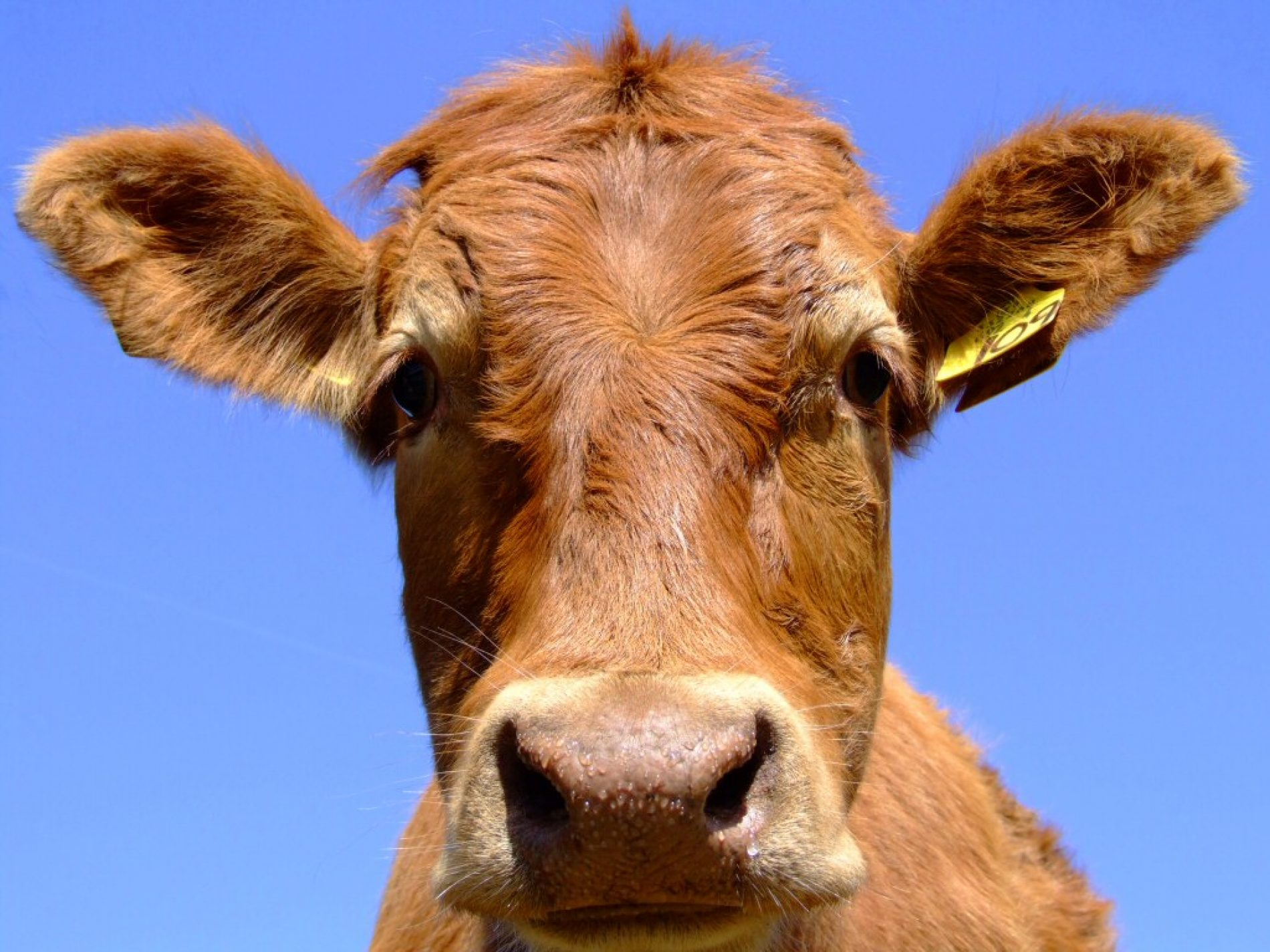 Zimbabwe: Agriculture Notes Concern Reports of Foot-and-Mouth Disease Outbreak in Zimbabwe