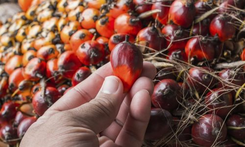 Palm Oil Production, The Untapped Lucrative Business.
