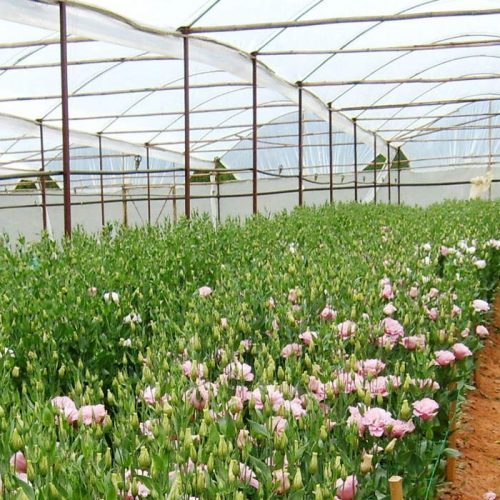 York Farm to increase flower cultivation
