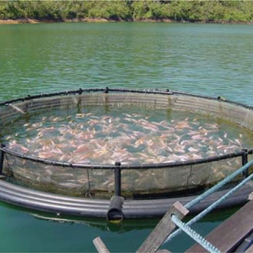 President calls for aquaculture ventures