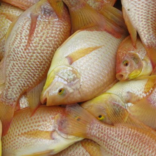 South African aquaculture success lies with government