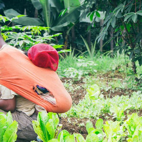 Country needs strategy to link farmers to Agro-processors