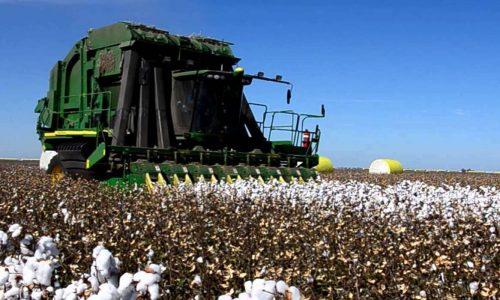 Set up cotton out-grower scheme, IDC told