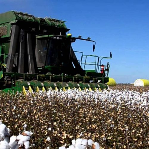 Set up cotton out-grower scheme, IDC told