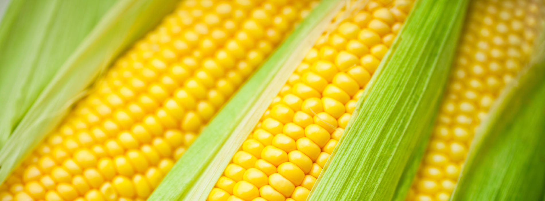 Zimbabwean Govt to Import 1,7 Million Tonnes of Maize