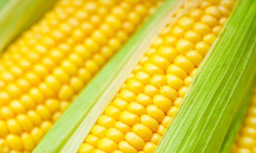 New maize floor price irks MMD