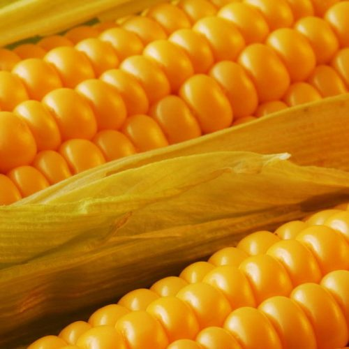 Kapiri farmers reject FRA maize price