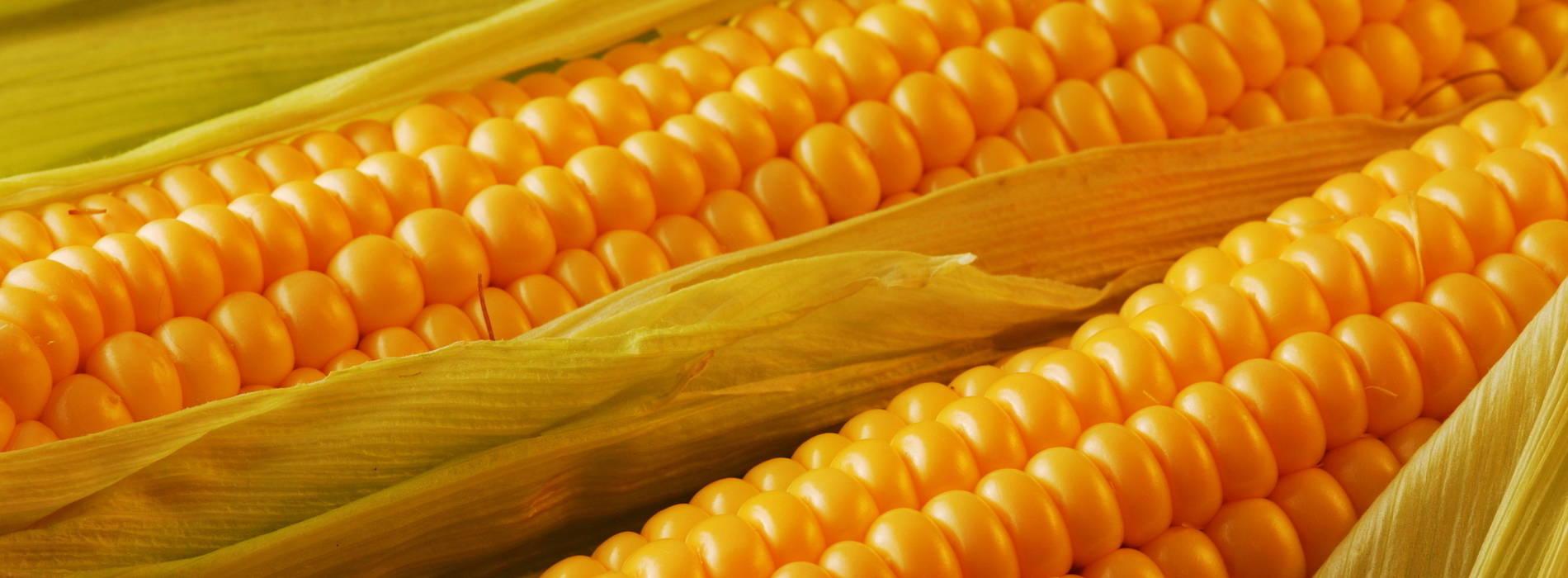 Kapiri farmers reject fra maize price agri business zambia kapiri farmers reject fra maize price voltagebd Image collections