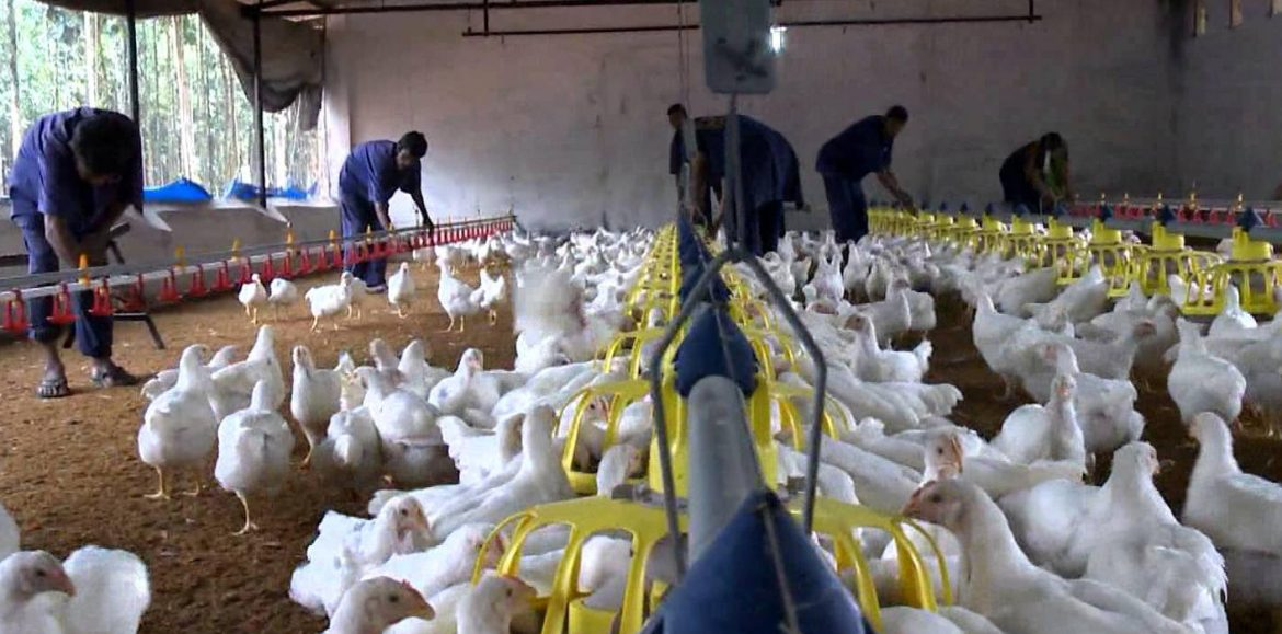 Zambia needs poultry farmers training