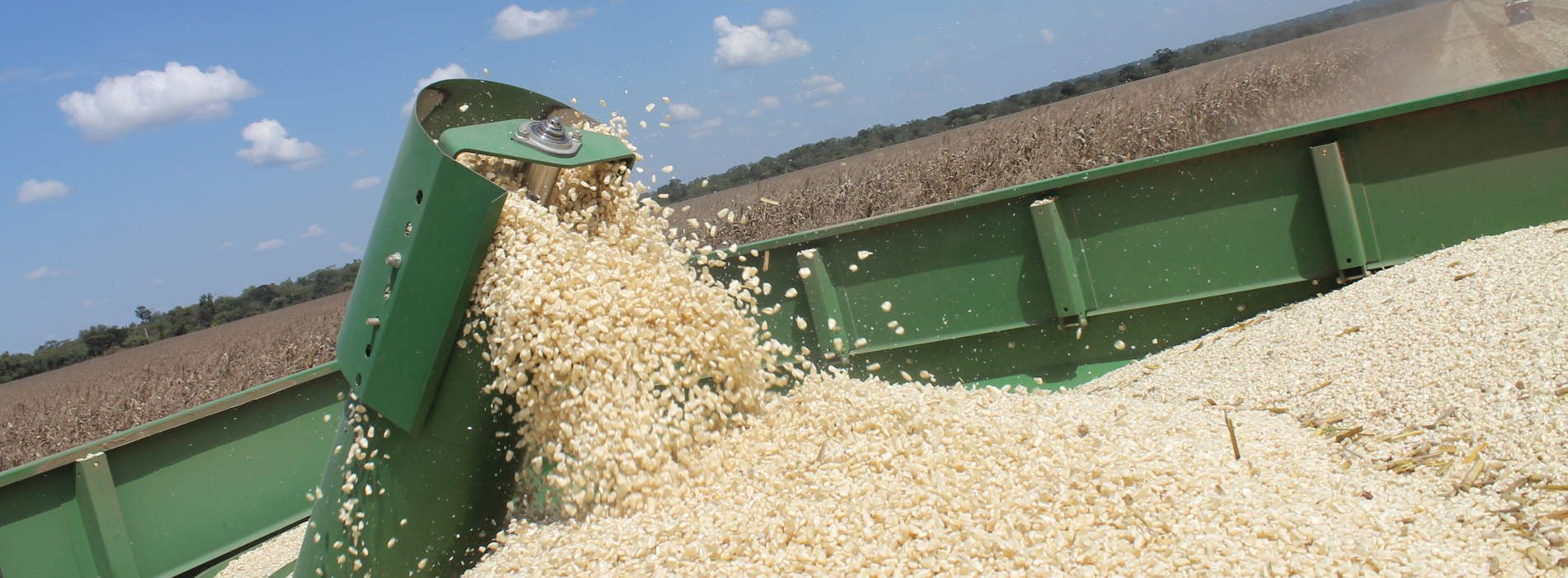 Namibia to harvest more than 40 000 tonnes of white maize
