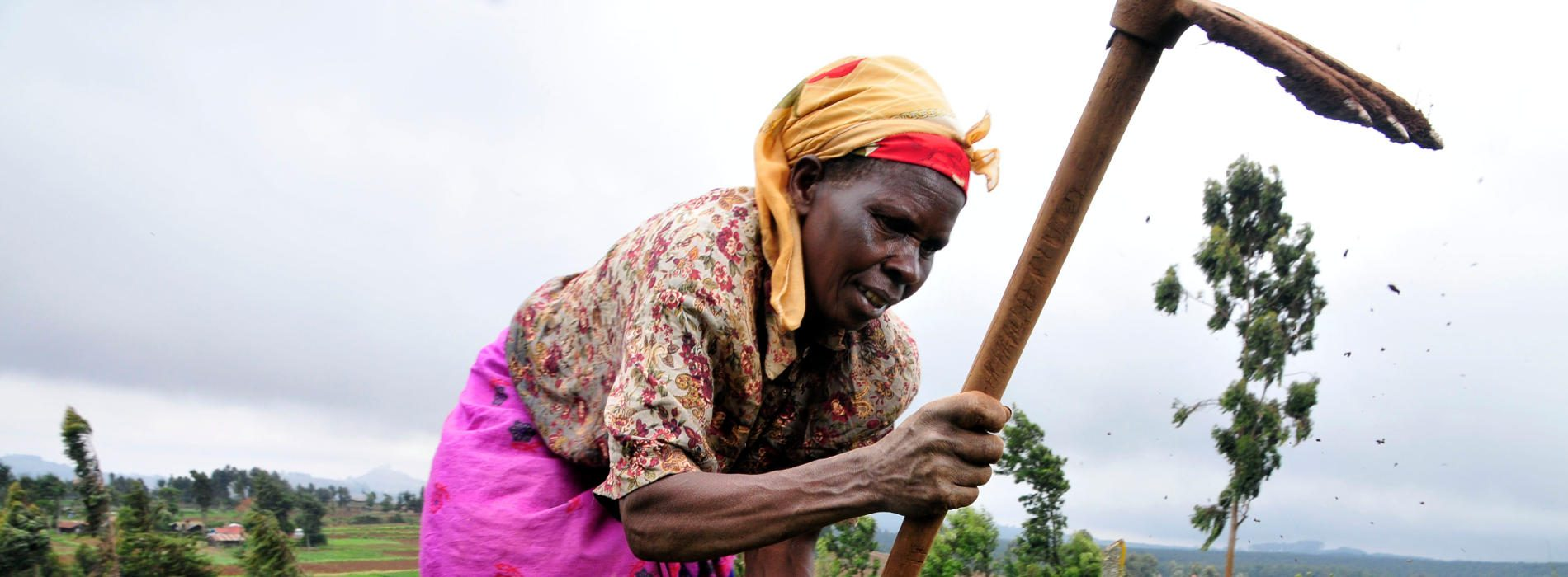 Weather forecasts project roll-out help women farmers