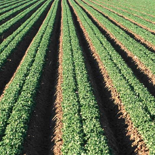 Private sector financed farm in the pipeline for Copperbelt