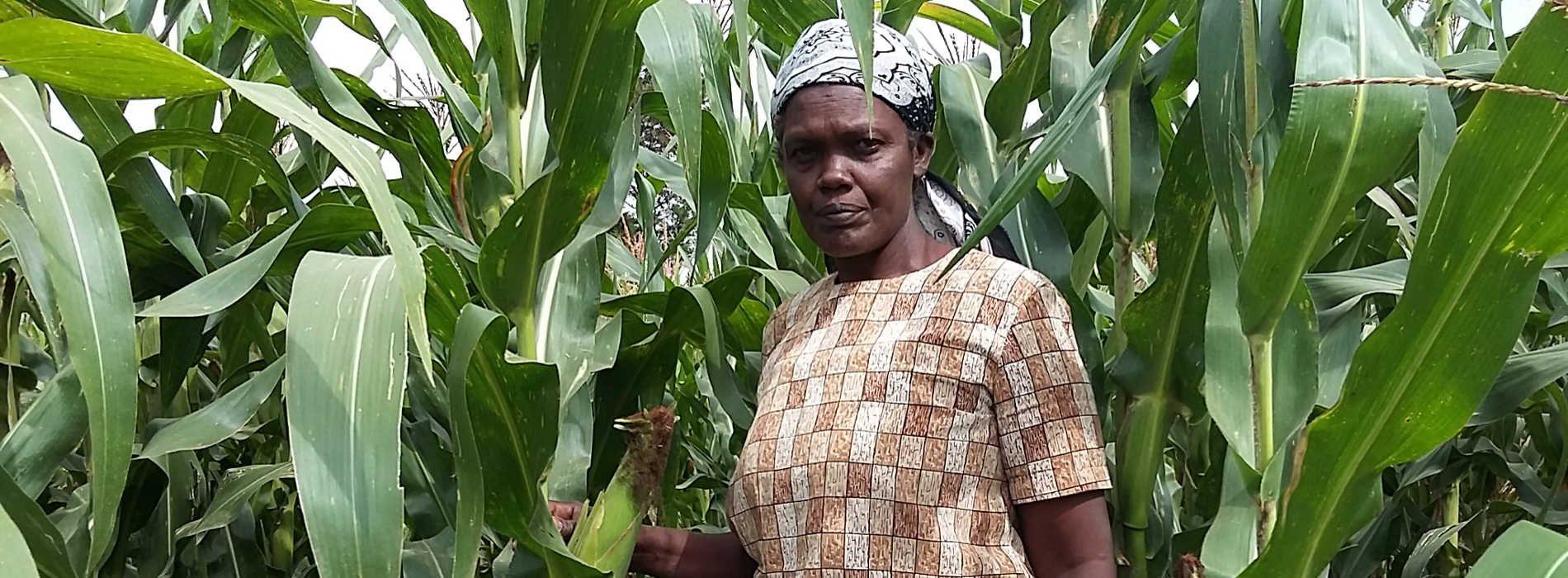 FRA seeks 220,000 tonnes of maize