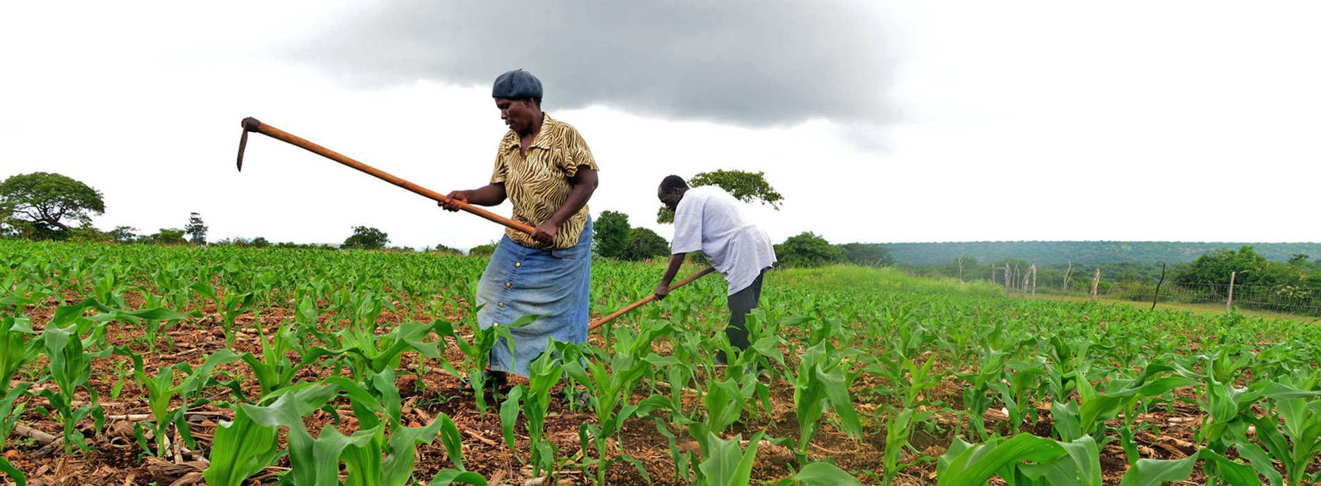 Identify strategies to improve agriculture output
