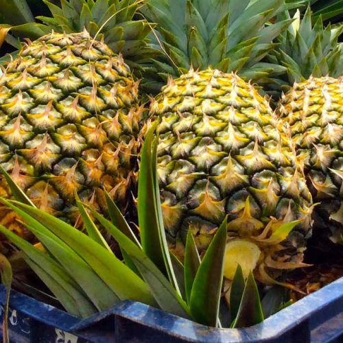 Pineapple industry revived in Ikelenge