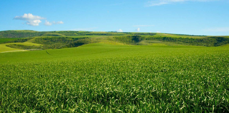 Future Farm in Zambia, inspire AGCO to more for Africa