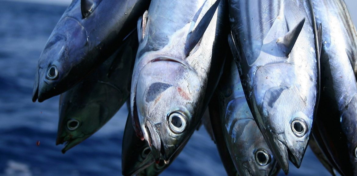 Import ban on fisheries and livestock lifted