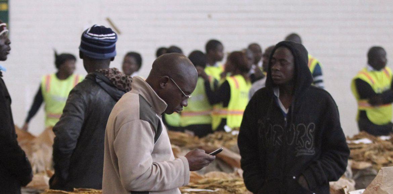 Zimbabwe Tobacco Sales Top $47 Million