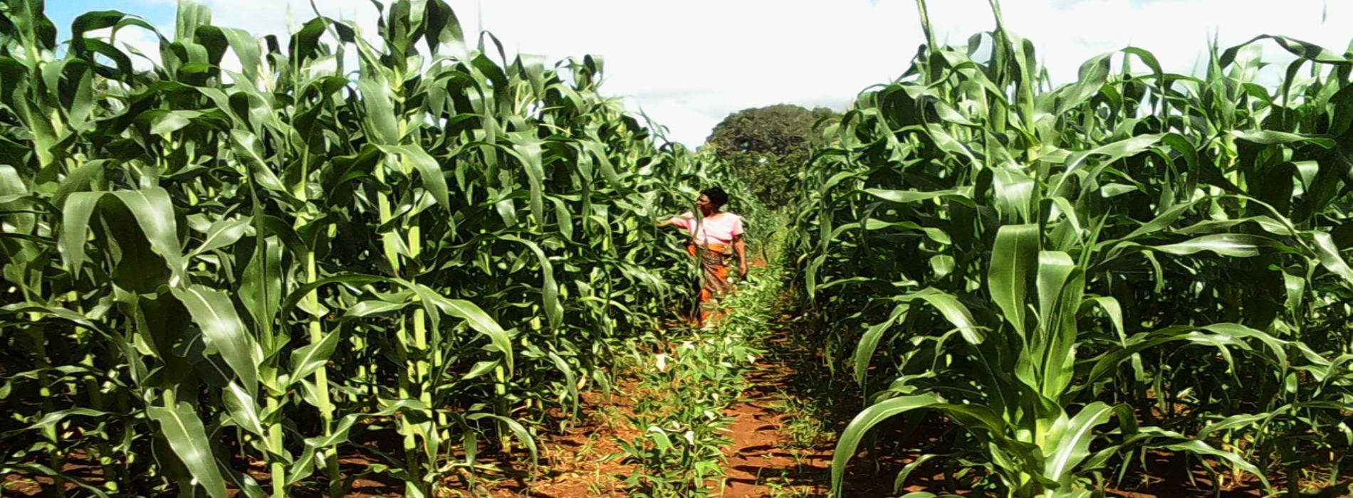 Boosting agricultural production in eastern and southern Africa