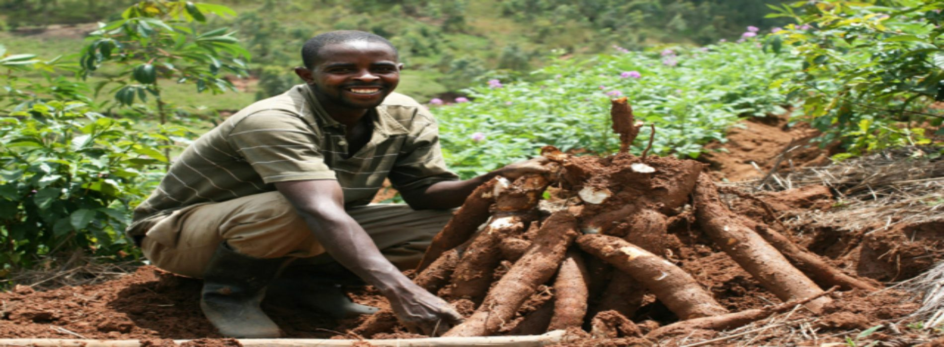 Farmers urged to plant drought resistant crops