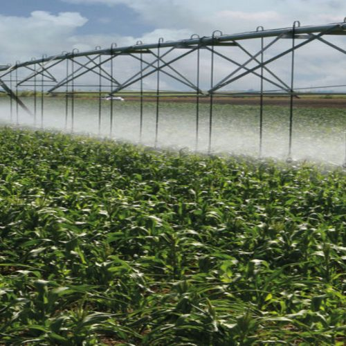 Farmers urged to consider irrigation farming