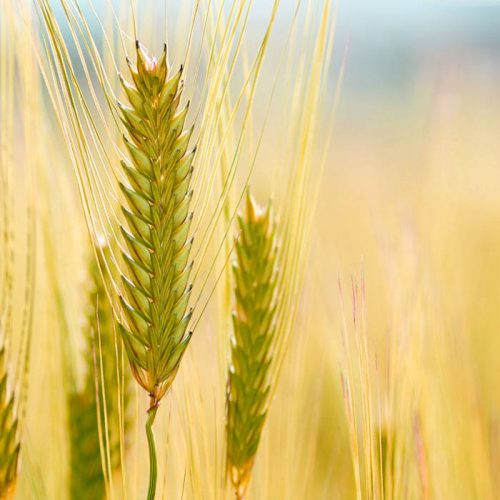 Zambian grain futures – no need to hold back