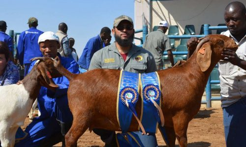 Kalahari Red Goats scoop several awards in Botswana