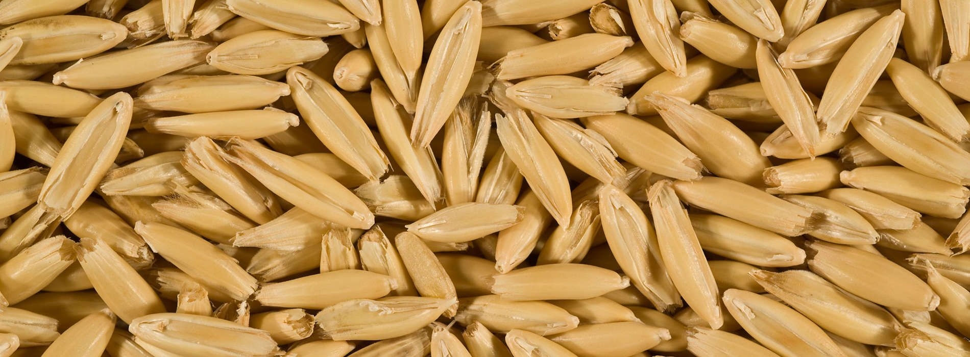 Oats processing centre opens in Lusaka