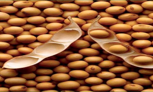Agriculturists in Mzimba stranded as soya costs fall.