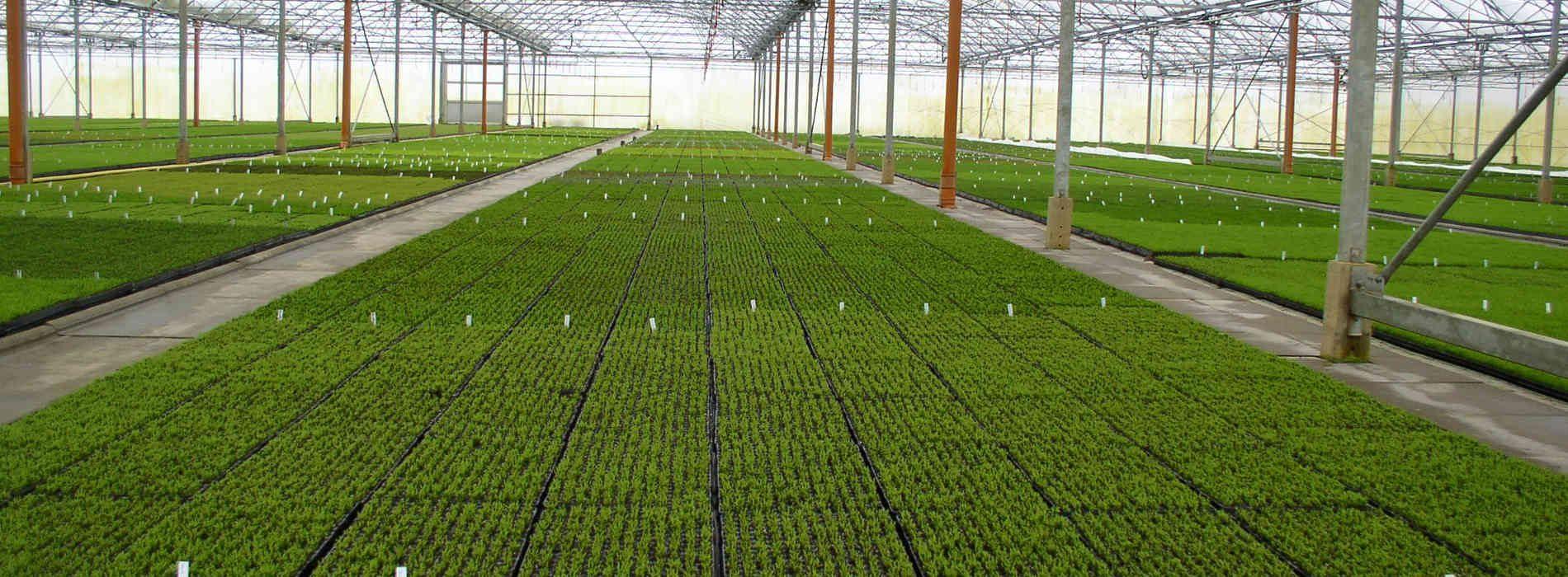 Invest in horticulture, ZEGA urges Govt