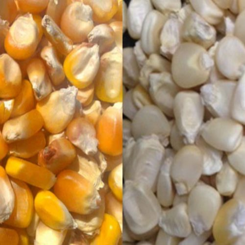 Zambia has enough maize grain  – MAZ