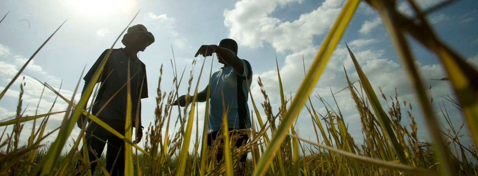 African countries need to push Climate Smart Agriculture