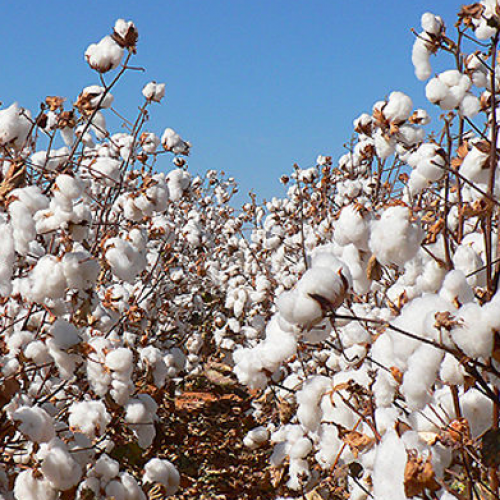 Tobacco, Cotton & Soya dominate Agro exports as inflation ticks up