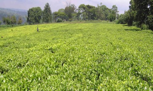 Luapula Farmers to yield from KTC