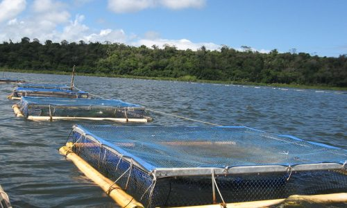 Chief applauds latest aquaculture techniques