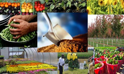 Kalumbila Mine sets up horticultural center