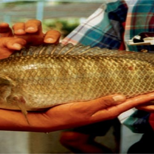 Six tips to make your fish farm more environmentally sustainable