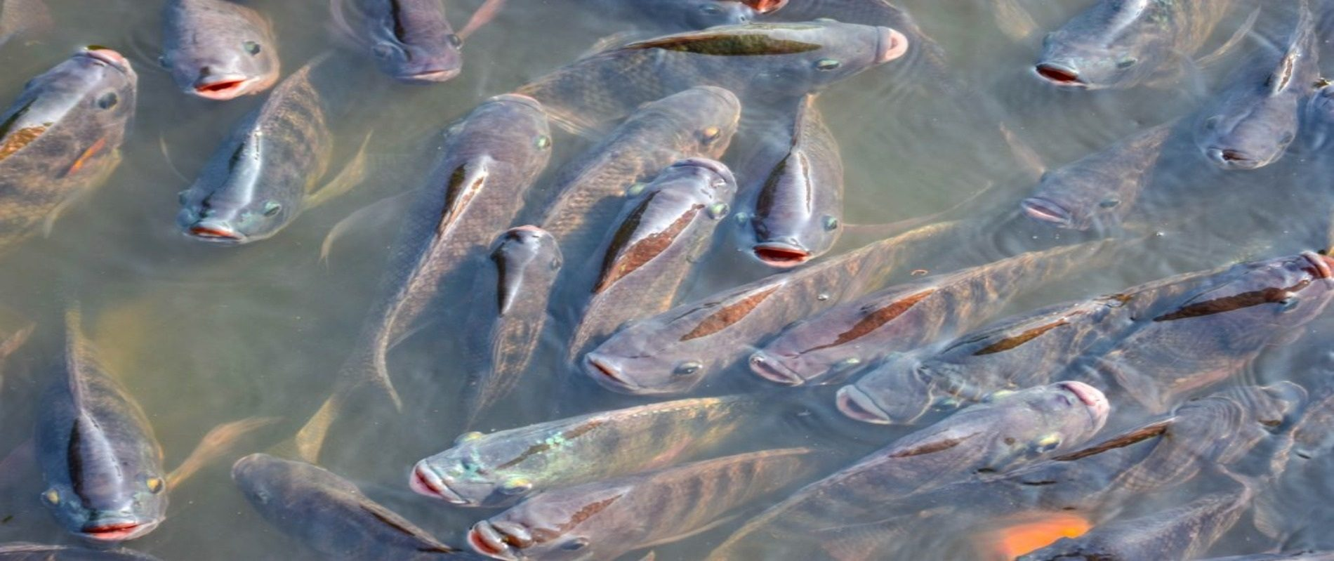 Take fish farming seriously, warns President