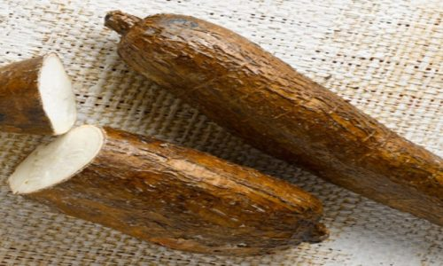 Zambia using cassava as a tool to fight COVID-19