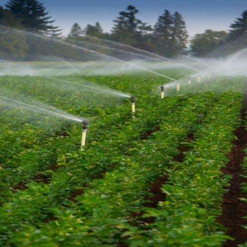Choosing an irrigation system