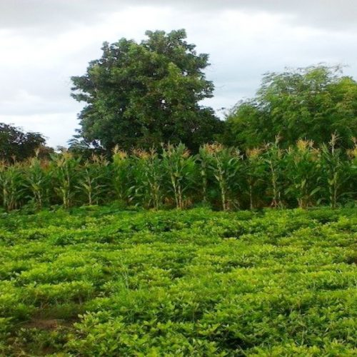 Zambian Firm partners U.S. farming body to help feed Country region