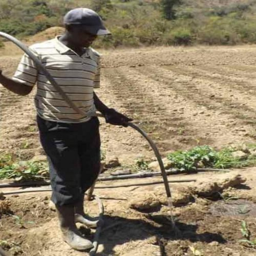 AfDB Climate change project bears fruit in Zambia