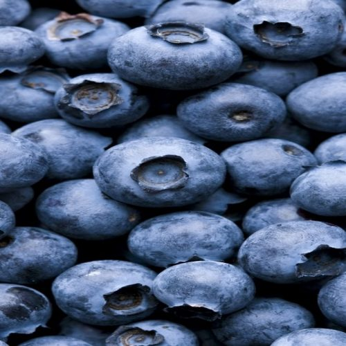 Zambian Blueberries find a new China market